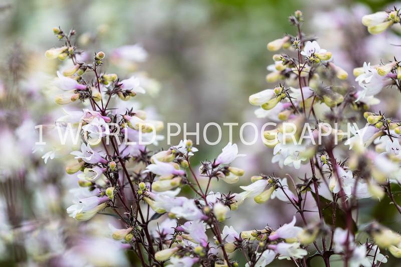 201906162019_6 Cantigny Flowers194--180.jpg