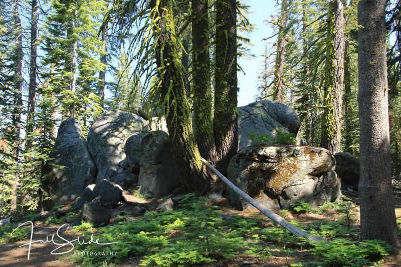 Yosemite 2018 -40.jpg