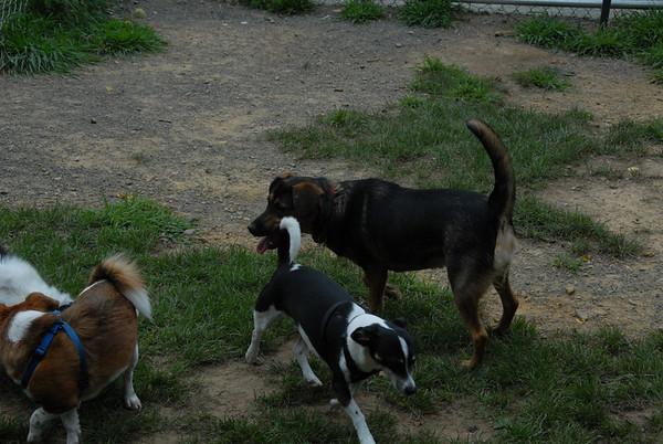 2011-08-13 Central Dog Park