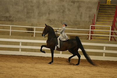 36A Saddle Seat Equitation – Walk/Trot, 10 Champ; Under