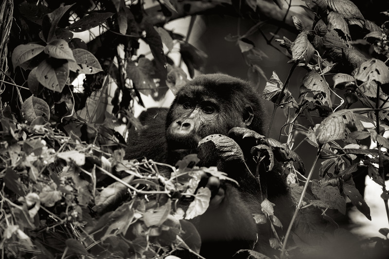 Uganda_T_Gor-2246.jpg