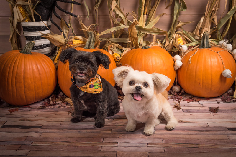 Howloween at Masters N Dogs!