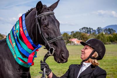2013 - Brighton Equestrian Club Annual Show