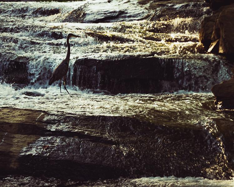 bigbird--2.jpg