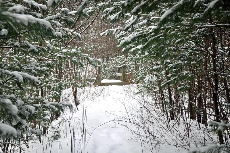 Snow around town 007.jpg