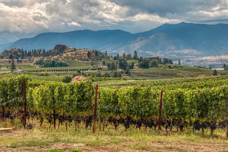 Vineyards, Neramata Bench, Penticton