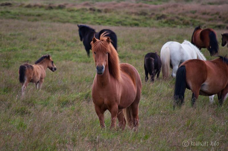 Photography-Tour-Iceland-9402.jpg