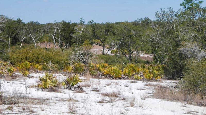White sand slope in scrub