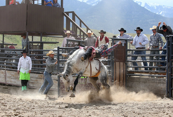Yellowstone's Epic Horse Drive  Rodeo - Horses