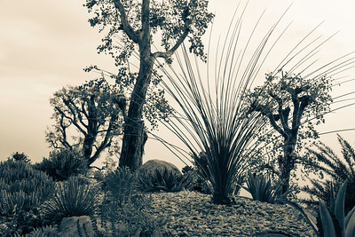Palisades Succulents