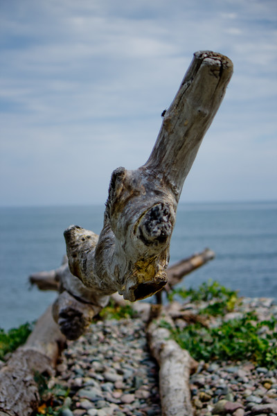Large Drift Wood on the Beach in Cape Breton Nova Scotia