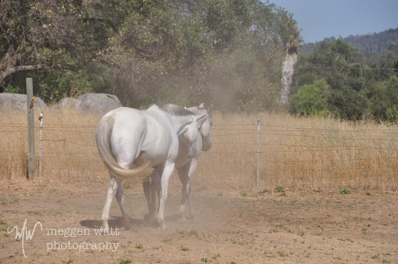 EB&Horses-100.jpg