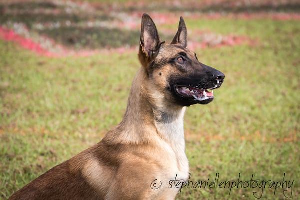 _MG_2322Up_dog_International_2016_StephaniellenPhotography.jpg