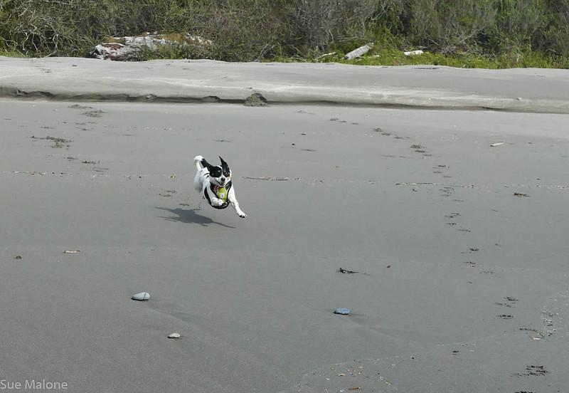 Walking on Harris Beach (15 of 24).jpg