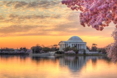 Cherry Blossom Festival Photography