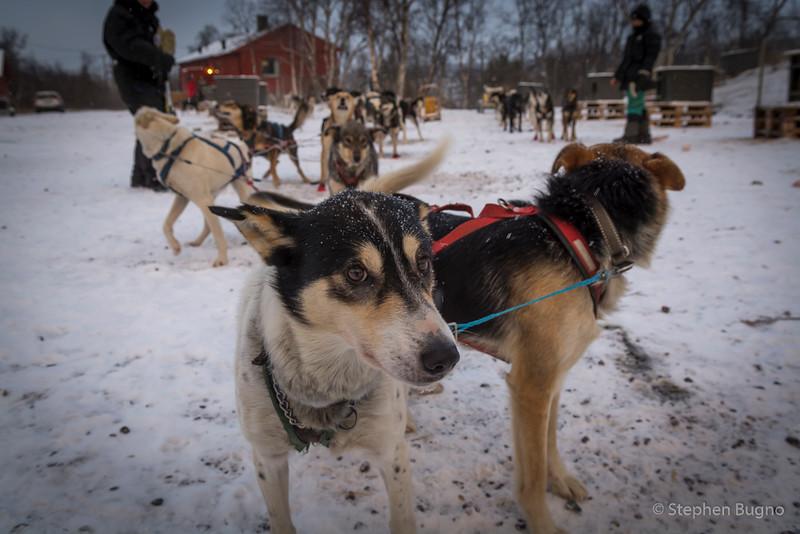 Dog Mushing-9660.jpg