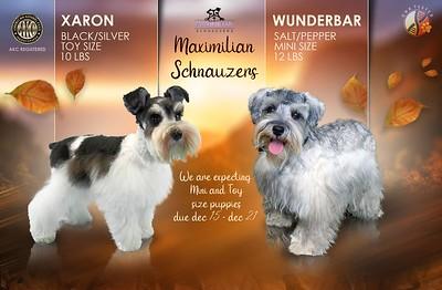 Wunderbar & Xaron Puppy, DOB 12/26/2020