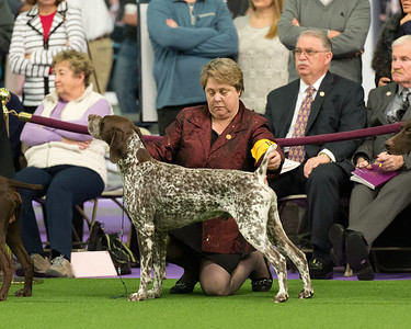 GCH CH Rose Mountain's Royal Rock N Roll Rudy JH