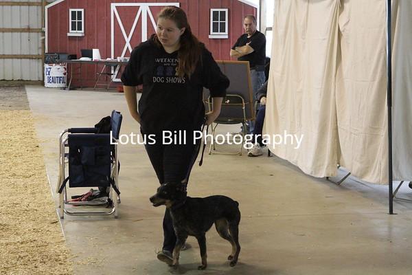 Nautique Cattle Dog