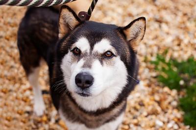 QAC Adoptable Pets - Jan 2013