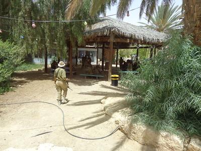 Negev Desert 16