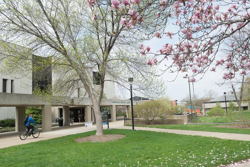 campus-2364April 15, 2013.jpg