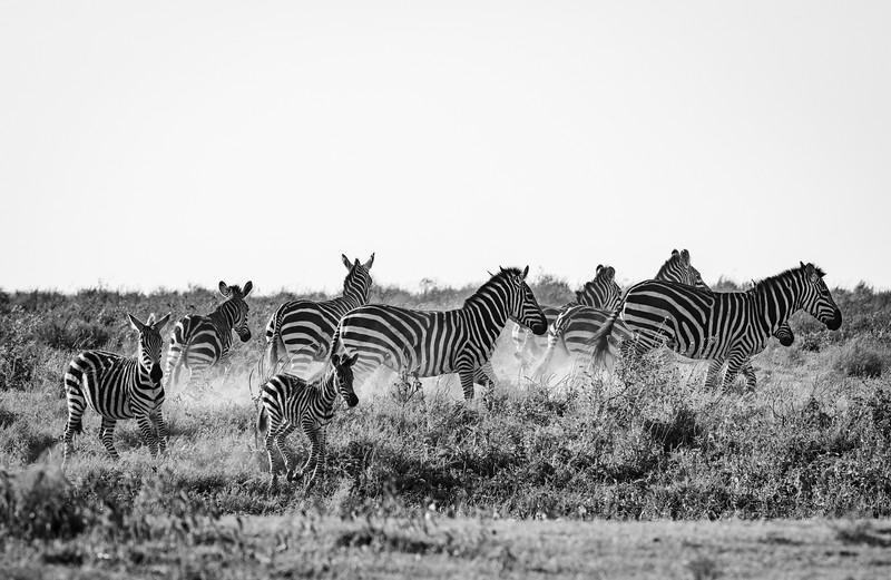 Tanzania_Feb_2018-338.jpg