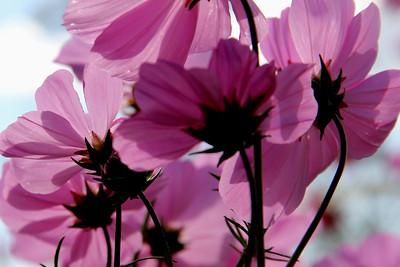 through a flower darkly