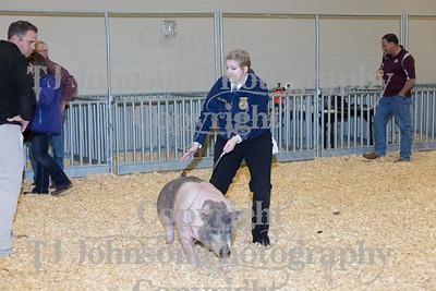 2016 KISD Swine Class 3