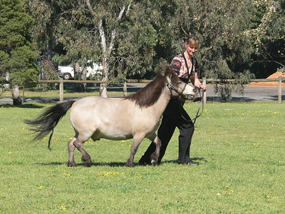 Buckskin Show - Berwick, October 2008
