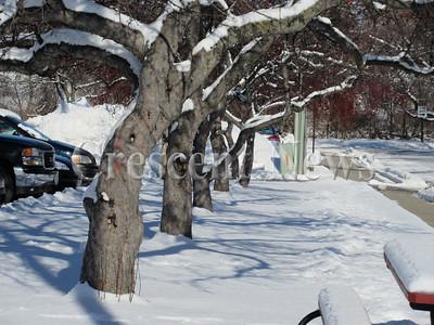 01-13-15 NEWS Snowy trees