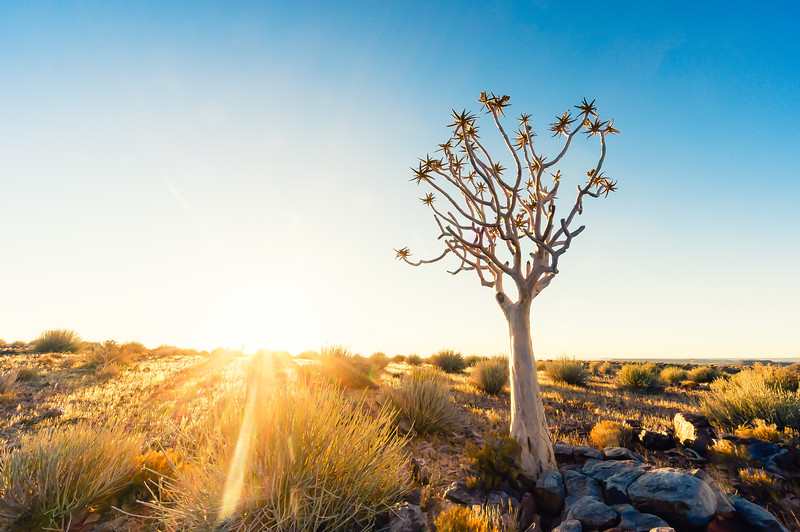 clear-quiver-tree-fish-river-canyon-namibia.jpg