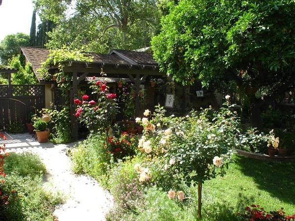 Studio front door is behind the red rose bush