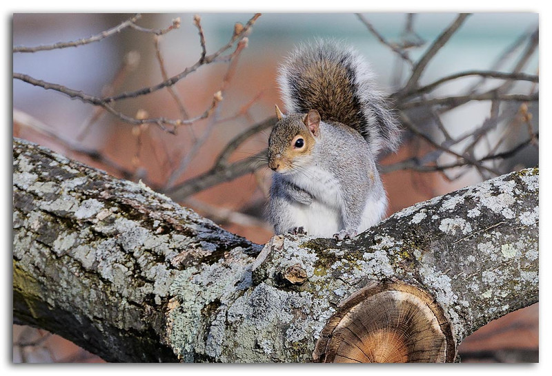 Squirrel enjoying a warm winter day.jpg