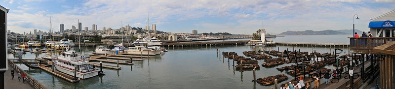 Pier 39, San Francisco - Sea Lions - Summer, 2009