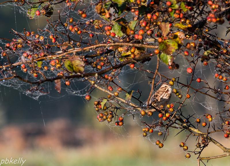 early morning bird 101413.jpg