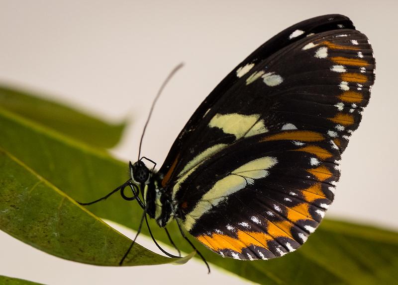 Butterfly 14.jpg