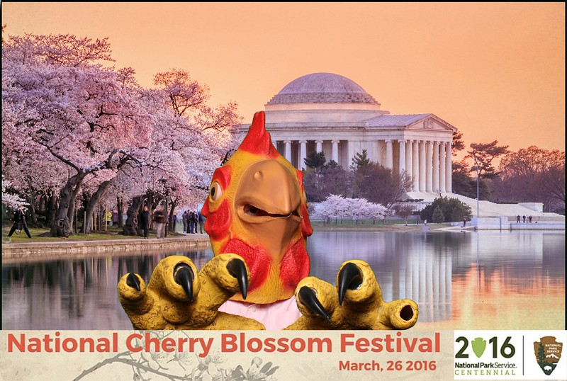 Boothie-NPS-CherryBlossom- (402).jpg