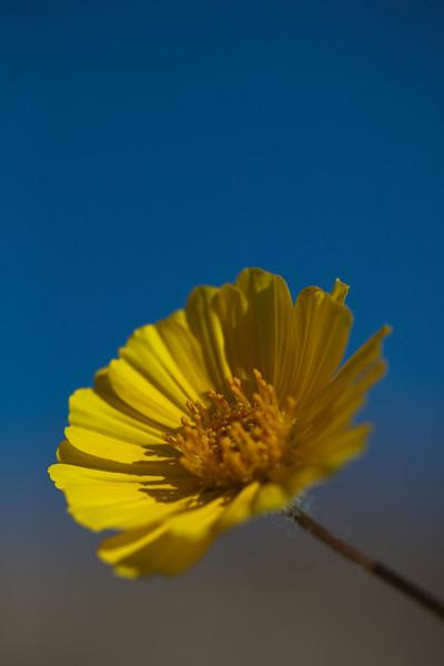 more-daisy.jpg