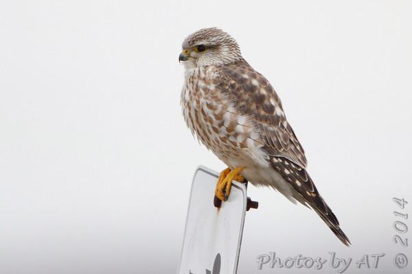 Birding 2014 January