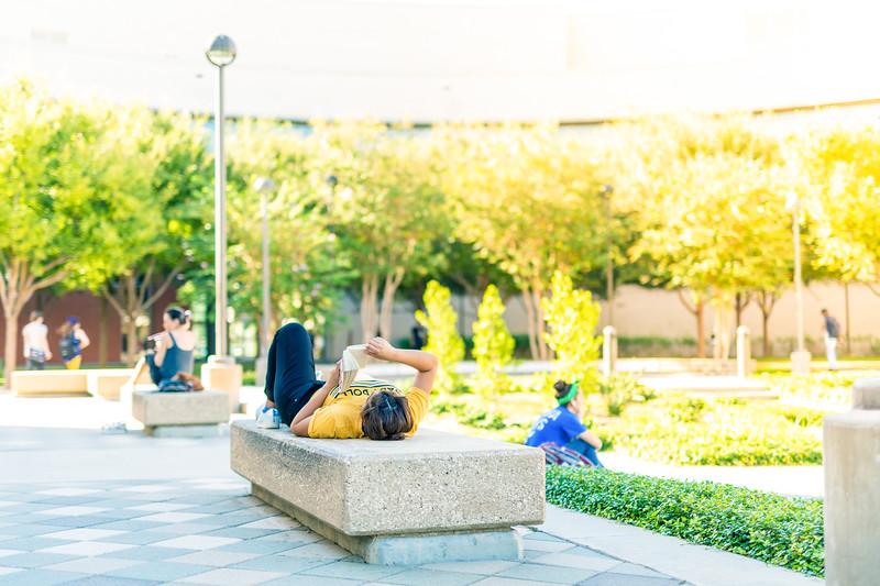 TAMU-CC student reading