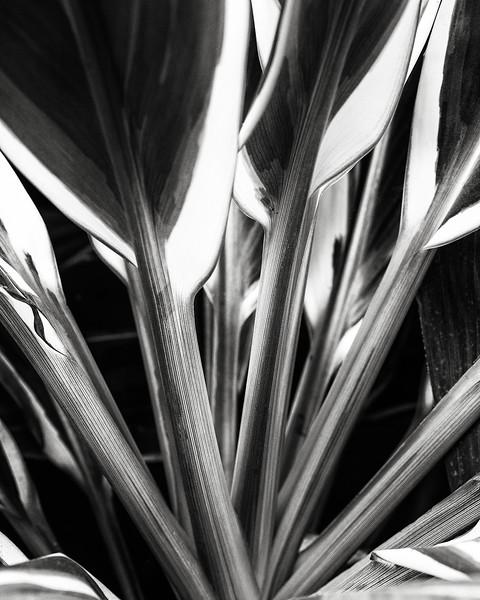 ti-leaves.jpg