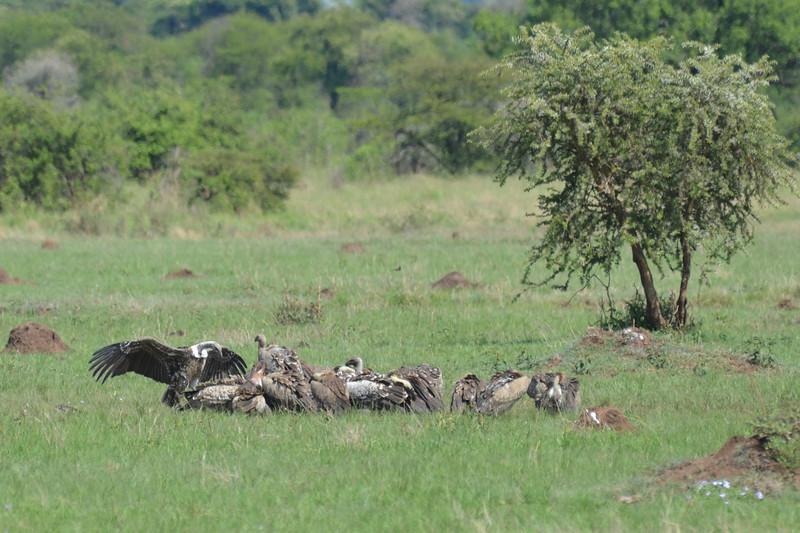 East Africa Safari 257.jpg