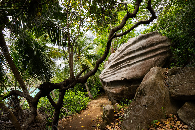 Seychelles, Moyenne Island, ..jpg