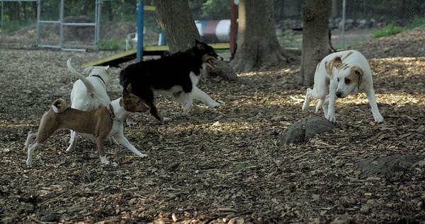 PICS JUNE 17::LUCY (pup girl)