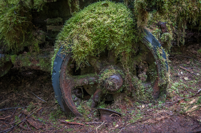 Wagon Wheel Abandoned in the Forest - Haida Gwaii, British Columbia