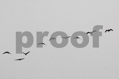 lubbock-area-goose-hunt-outstanding-crane-hunt-lays-an-egg