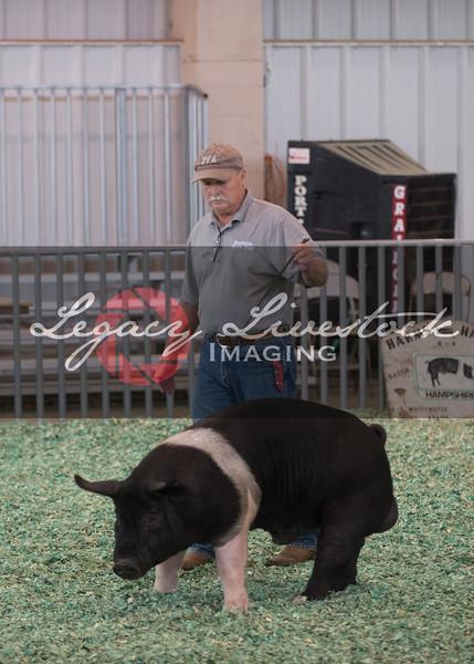 Open Hogs