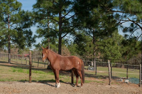 Aline's Horses 2012