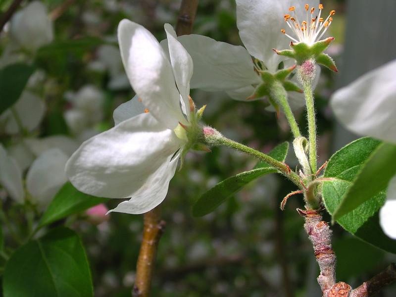white bloom83.JPG